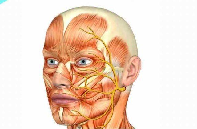 Воспаление лицевого нерва: симптомы и препараты для лечения в домашних условиях