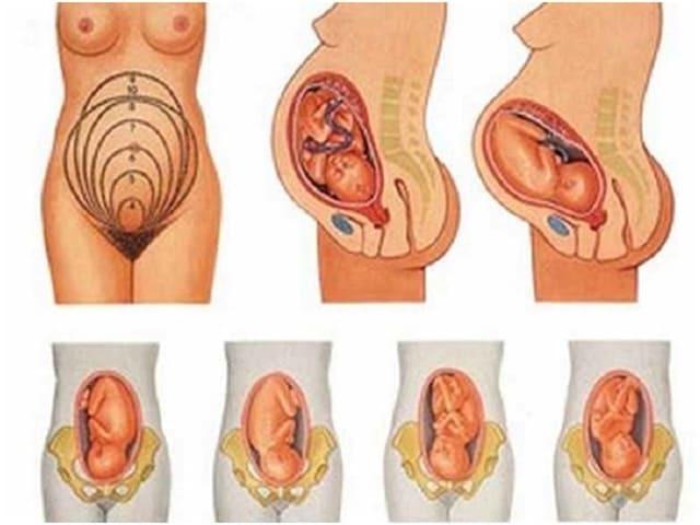 30 неделя беременности: развитие плода, рост и вес, что происходит с мамой