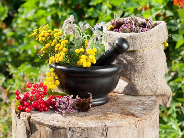 Какие травы принимать для похудения: лекарственные растения, способствующие снижению веса