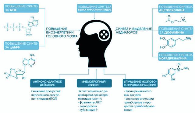 Какие препараты принимать для улучшения памяти?