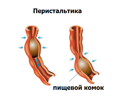 Как отличить невроз от других заболеваний: правила дифференцирования невроза от грыжи пищеводного отверстия диафрагмы