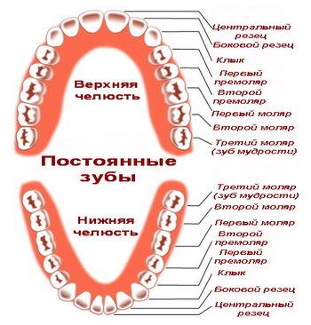 Сроки прорезывания зубов, признаки прорезывания и меры по устранению нежелательных симптомов