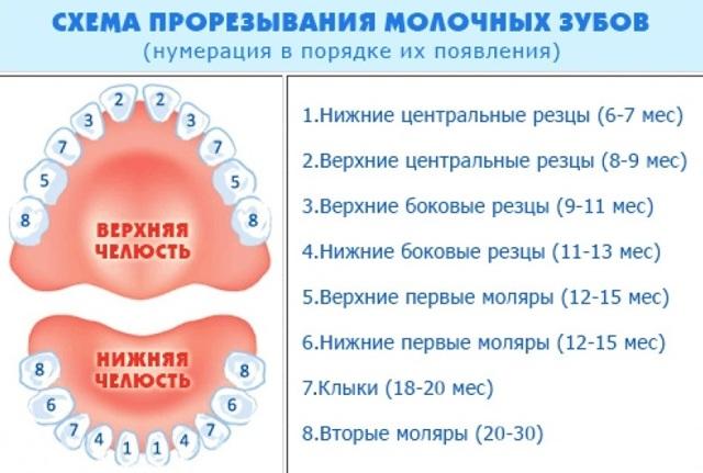 Режутся глазные зубы: симптомы, температура, понос, чем помочь ребенку