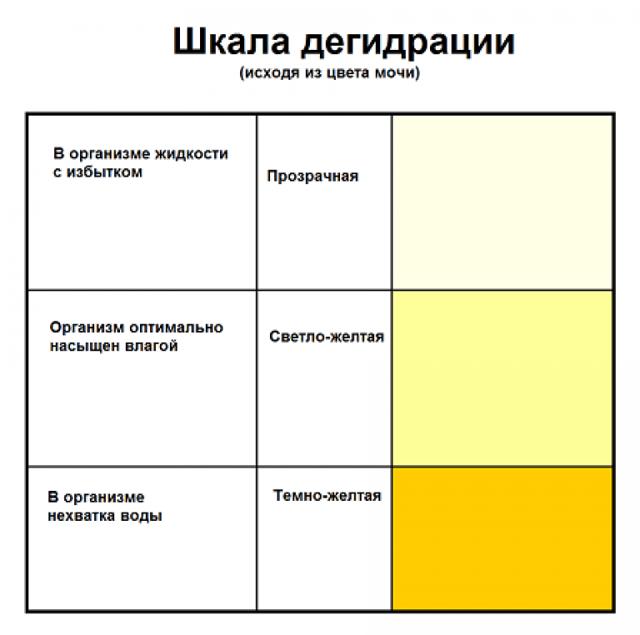Общий анализ мочи у взрослых: норма и расшифровка, таблица результатов, как сдавать