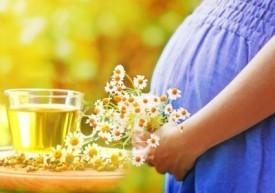 Лекарственные свойства ромашки аптечной, польза и вред ромашки, показания и противопоказания к ее употреблению, применение ромашки при беременности