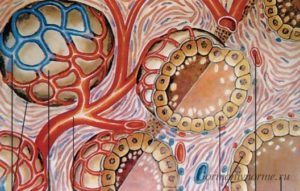 Как расшифровать анализ крови на гормоны щитовидной железы