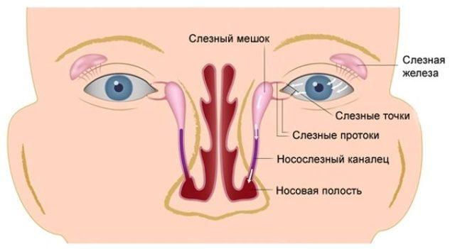 Непроходимость слезного канала у новорожденных: симптомы и лечение закупорки слезных каналов
