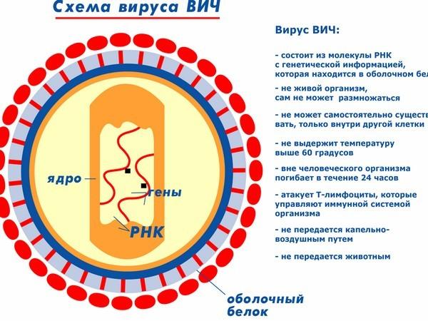 Может за 2 года ВИЧ развиться в ВИЧ энцефалопатию?