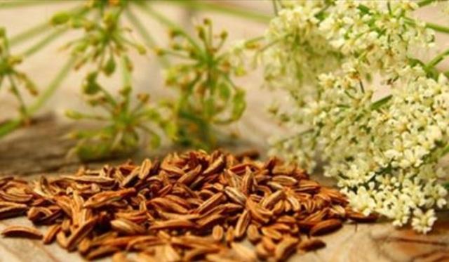 Зира: польза и вред специи, свойства зиры, противопоказания, применение