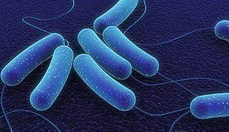 Сальмонеллез: причины, симптомы, лечение острой кишечной инфекции и профилактика сальмонеллеза