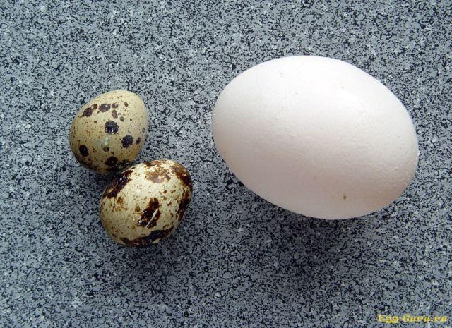 Перепелиные яйца – пищевая ценность продукта, вред и польза перепелиных яиц, сравнение с куриными.