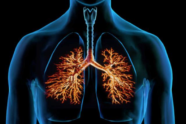 Аллергический бронхолегочный аспергиллез – симптомы у человека, диагностика, лечение.