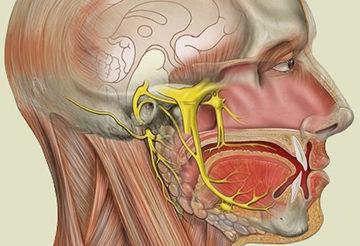 Неврит (невралгия) лицевого нерва – симптомы, лечение, эффективные препараты и массаж при неврите лицевого нерва