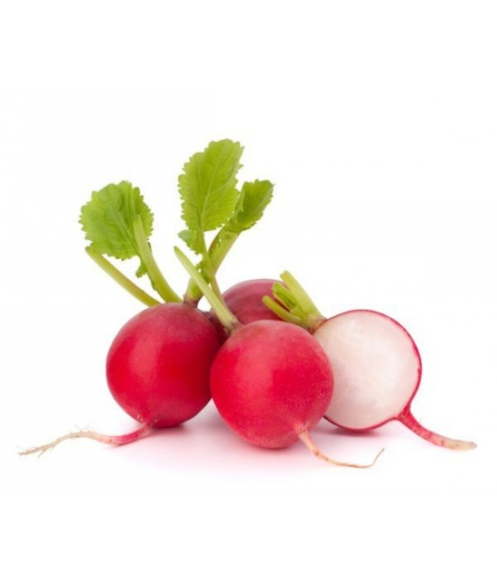 Полезные свойства редиса, состав и пищевая ценность, вред редиса и его применение