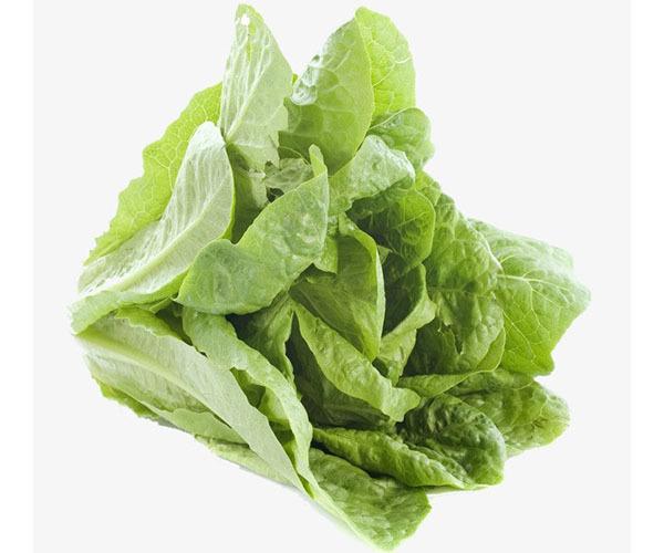 Вред и польза латука, состав салата, сферы его применения.