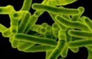 Туберкулез половых органов у женщин: симптомы мочеполового туберкулеза, лечение, осложнения
