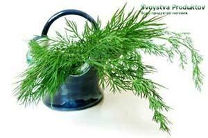 Укроп – польза и вред, пищевая ценность, состав, применение в народной медицине