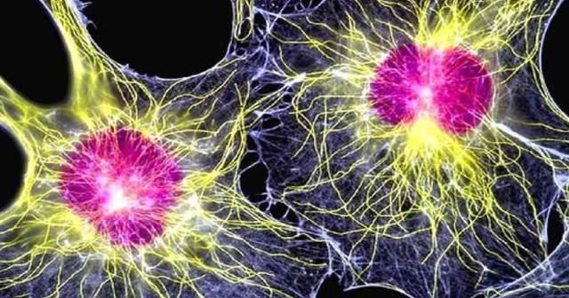 Стволовые клетки человека: применение пуповинной крови, лечение стволовыми клетками