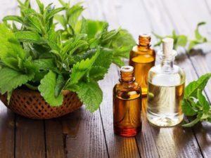 Польза мяты, ее химический состав, применение в кулинарии и медицине, противопоказания