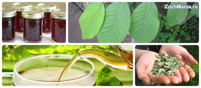 Состав черемухи, полезные свойства черемухи и противопоказания к использованию сырья из черемухи.