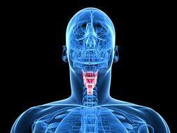 Травмы гортани и трахеи: симптомы, лечение, профилактика