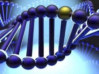 Анализ на гены рака молочной железы brca1 и brca2, расшифровка результатов