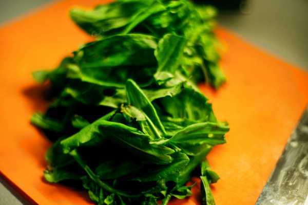 Щавель - полезные свойства, состав и пищевая ценность, способы приготовления, вред для организма