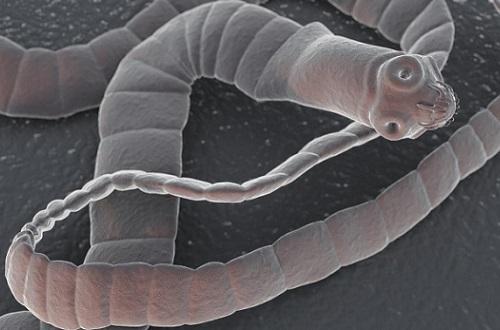 Кашель при глистах у детей: кашель от глистов – симптомы и лечение