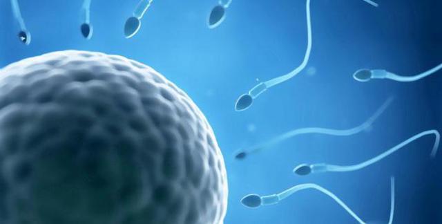 Тератоспермия: что это такое, причины и лечение тератоспермии