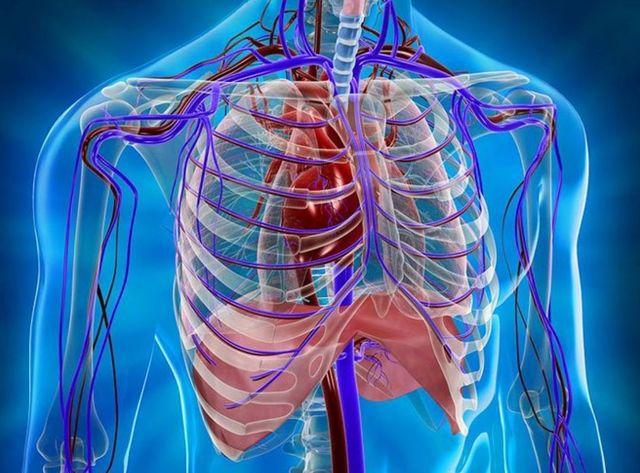 МРТ грудной клетки – что показывает, как делают, подготовка к МРТ