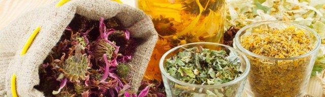 Травы для почек: лечение почек народными средствами, полезные травяные отвары для почек