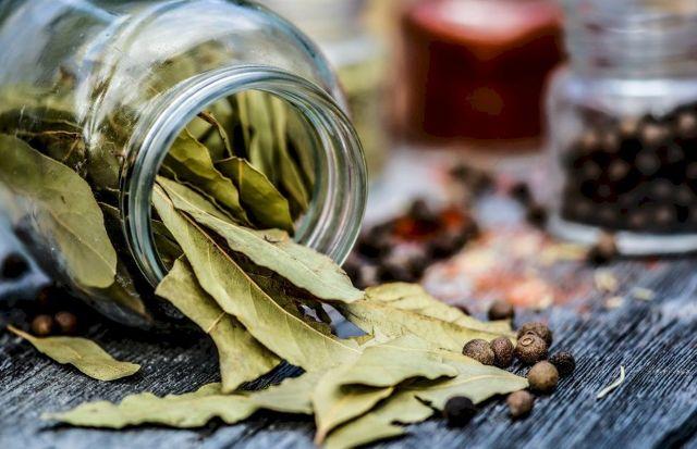 Польза и вред лаврового листа, употребление лаврового листа в пищу, применение его в качестве лекарственного препарата