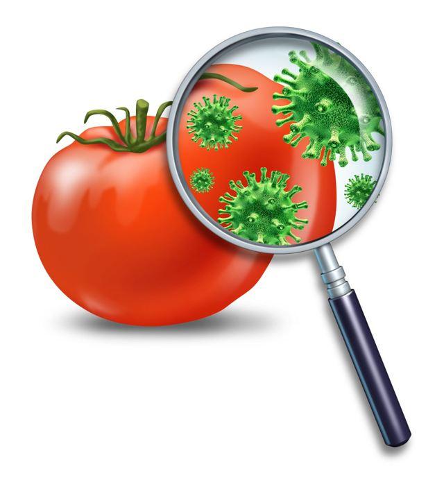 Пищевые токсикоинфекции: симптомы, лечение и профилактика пищевых токсикоинфекций
