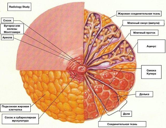 Жировой некроз молочной железы: симптомы, лечение, как выявить на УЗИ липогранулему