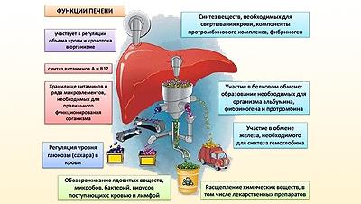 Острая печеночная недостаточность: симптомы, причины развития, лечение и неотложная помощь при острой печеночной недостаточности