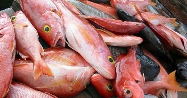 Морской окунь – польза, вред, противопоказания, химический состав