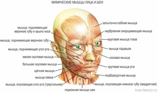 Миостимуляция лица: показания, преимущества, особенности, схема миостимуляции